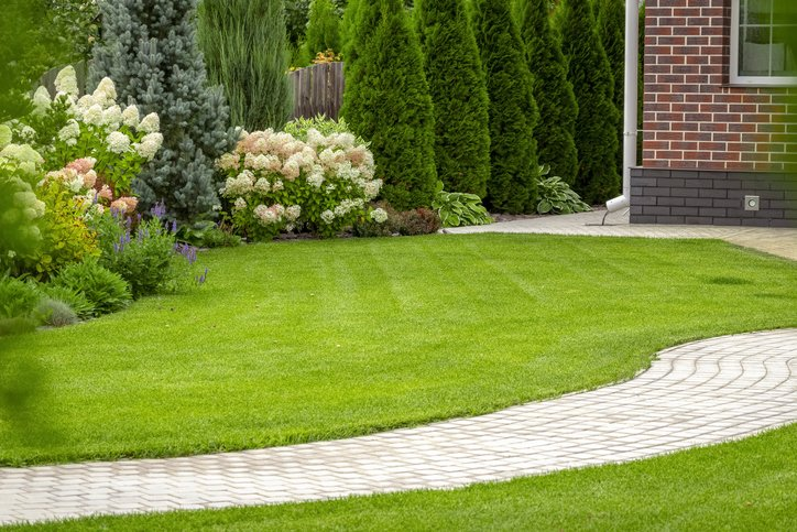 Do You Have a Vision For Your Yard?