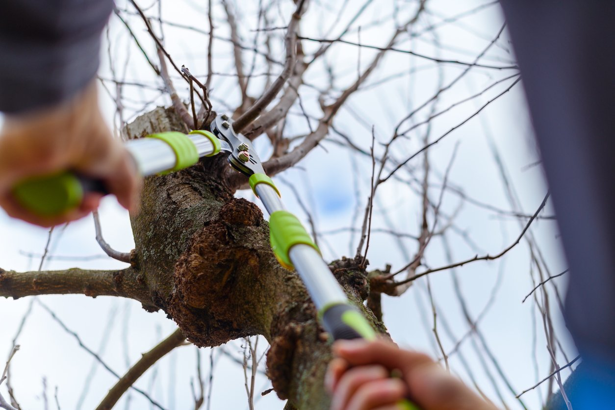 Easy ways to maintain your trees in the winter